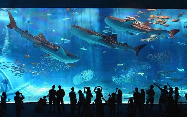 20 Thủy cung thú vị tại Nhật Bản bạn không nên bỏ lỡ.